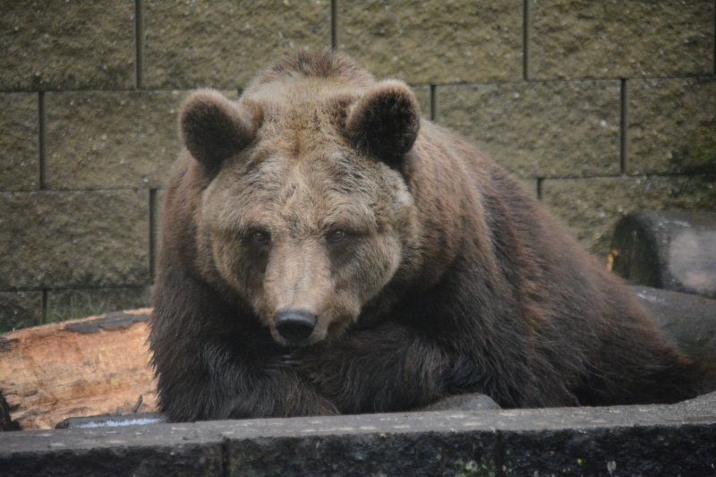 Čtvrt století medvědice Airiny