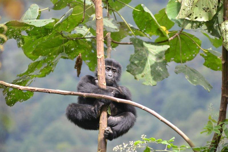 Den bez palmového oleje - 1.únor