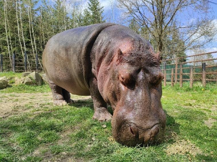 Postupné vypouštění zvířat do venkovních expozic, voliér a výběhů