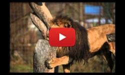 Ilustrační fotografie k článku Jak to u nás v Zoo žije