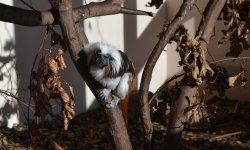 Nejmenší primáti světa
