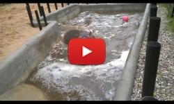 Buborék si hraje v bazénu