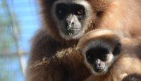 Megi nebo Gabi a rodinná vstupenka do zoo