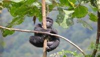 Podporujeme ochranu gorily horské