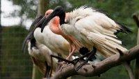 Mezinárodní den ptactva