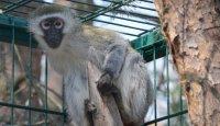 Nový druh afrického primáta