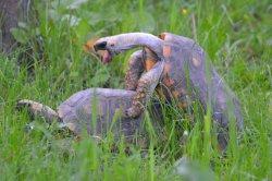 Iustrační foto k Želva pralesní