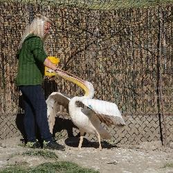 Světový den zvířat