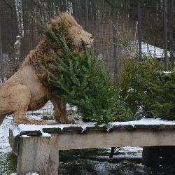 Stromy pro zvířata.