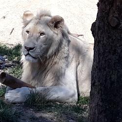 12. výročí zoo a Mezinárodní den lvů