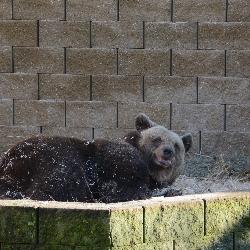 Šťastná medvědice