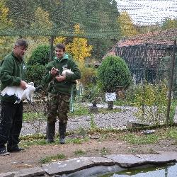 Obnova zimoviště pro ptáky po požáru