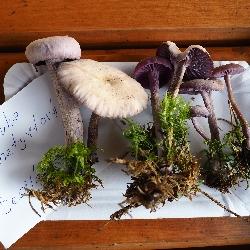 Výsadba stromků, houby, domečky pro ptáčky a hmyz