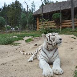 V zoo to o prázdninách žilo.