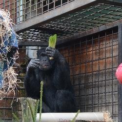 Vánoce v zoo