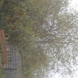 Zoo zahalená do ranní mlhy