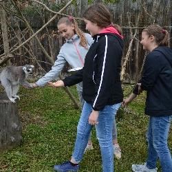 Lemur děkuje za podporu.