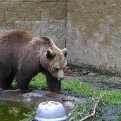 Medvědici je 22 let