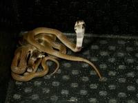 Mezinárodní den hadů