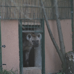 Rok 2019 v Zoologické zahradě Dvorec…