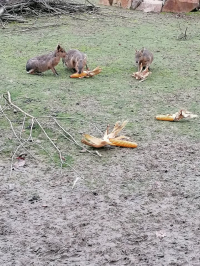 Zvířata v uzavřené zoo
