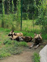 Světový den divokých psů